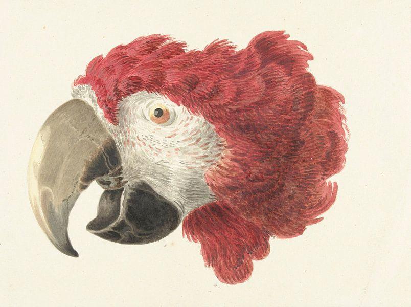 Kopf eines Aras, Aert Schouman von Meesterlijcke Meesters