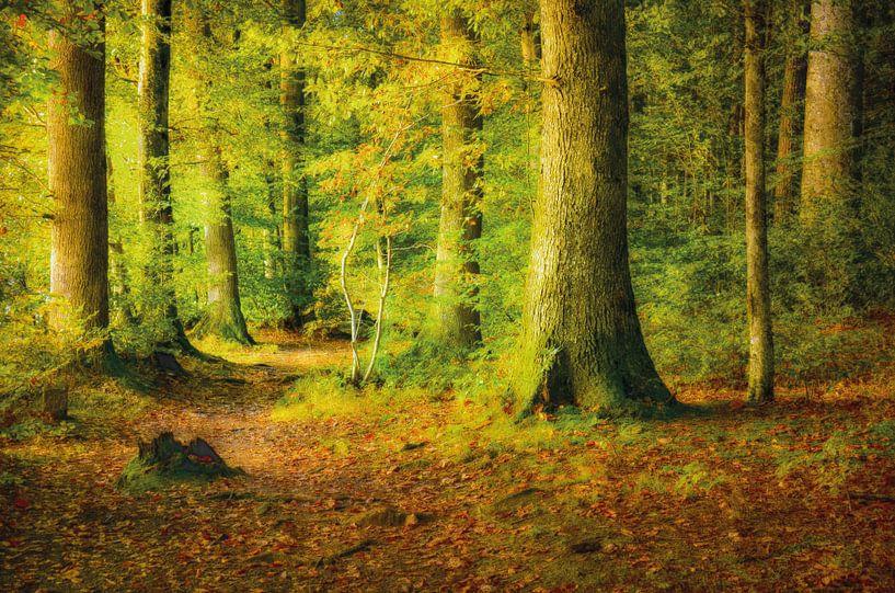 Wald im Sonnenlicht von Nicc Koch