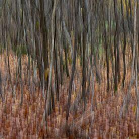 Abstracte bomen in een bos gefotografeerd met subtiele beweging zodat schilderachtig effect ontstaat van Tonko Oosterink