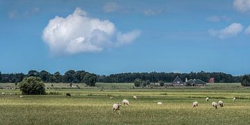 Paysage de Gaasterland dans le sud-ouest de la Frise sur