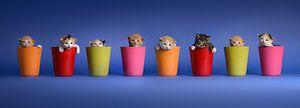Kitten Katten Poezen