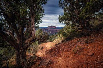 Wacholder Baum Wachen von Joris Pannemans - Loris Photography