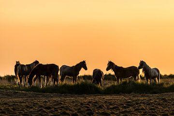 Gouden pony's van