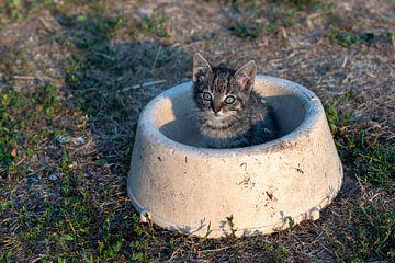 Jonge kitten op een boerderij in een voerbak van