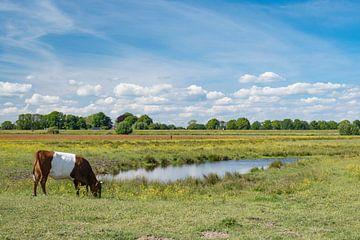 Lakenvelder koe graast in het Vechtdal in het voorjaar van Sjoerd van der Wal