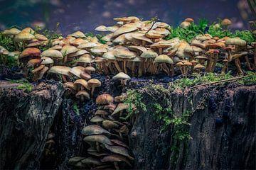 Magische paddenstoelen von Tim Abeln