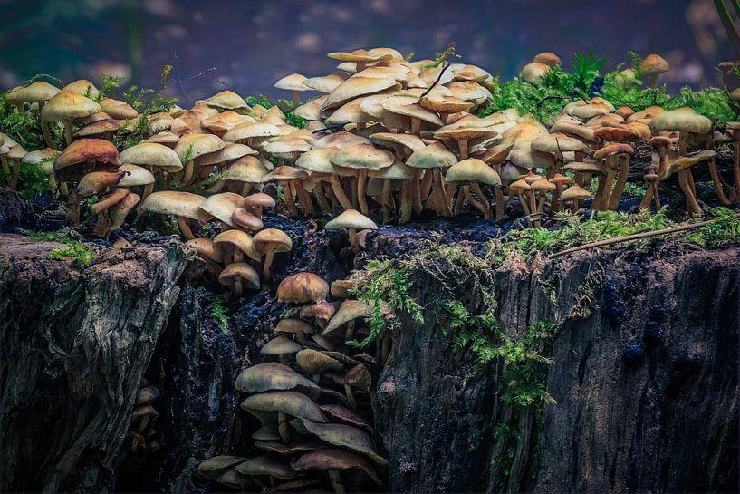 Magische paddenstoelen van Tim Abeln