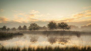 Bomen in de ochtendnevel van Lex Schulte