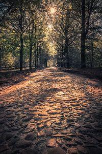 Forest van Ronnie Schuringa