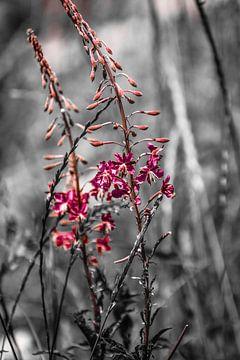 Nature's fine touch van melissa demeunier