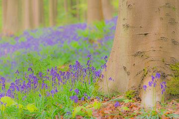 wilde hyacinten bloemen die in het voorjaar op de bosbodem groeien van Sjoerd van der Wal