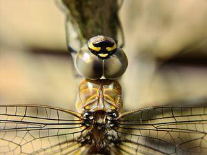 Libelle von Brigitte Hofman-Balfoort
