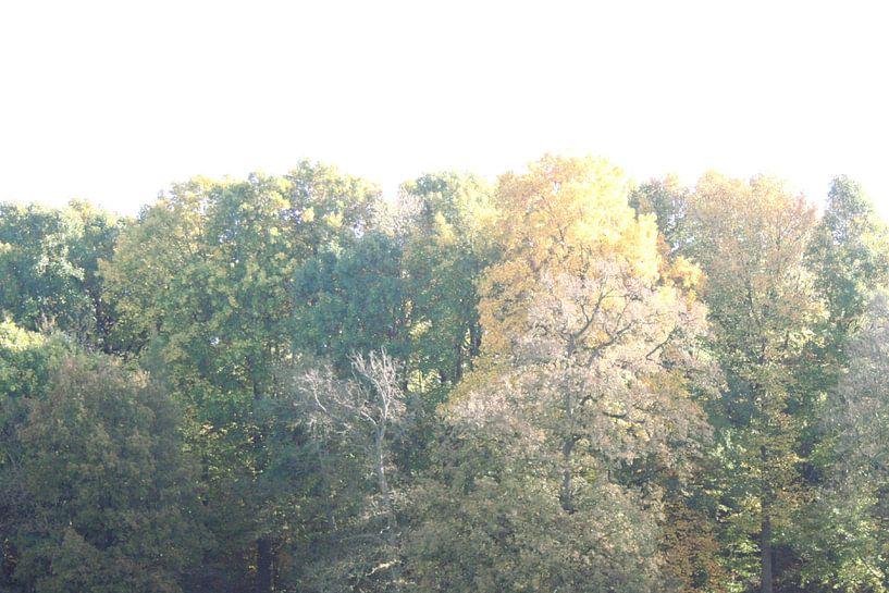 Bomenrij van Jessica van den Heuvel