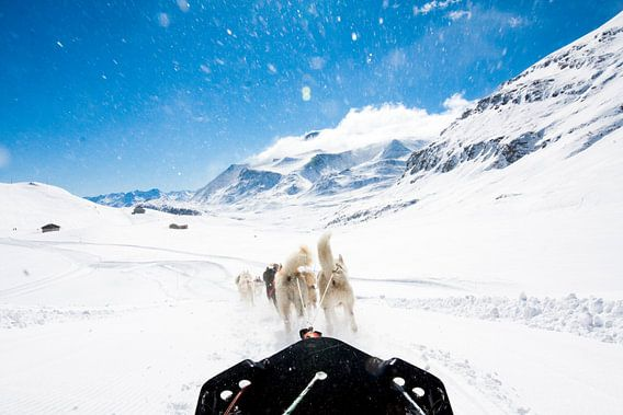 Hondensledetocht in de Franse Alpen