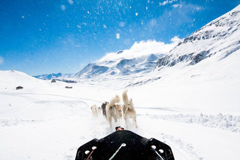 Hondensledetocht in de Franse Alpen van Rosanne Langenberg