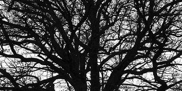 Waldpanorama von Thomas Jäger