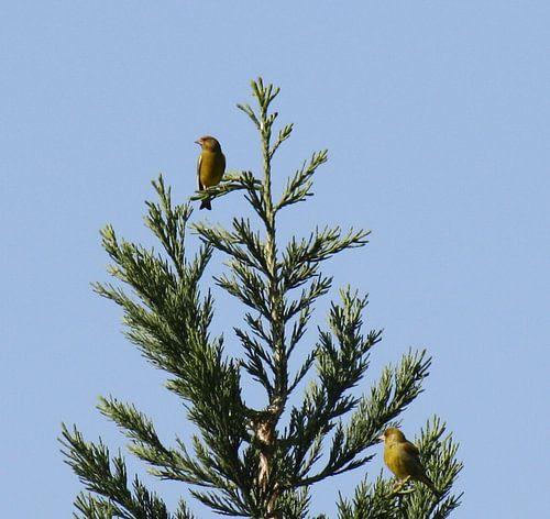 Vogels in de top van