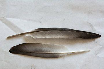 Twee vogelveren van Kok and Kok