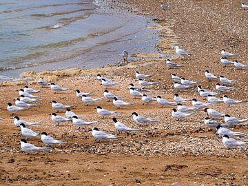 Meeuwen zitten in dezelfde richting op het strand van Bay of Islands in Nieuw-Zeeland van Rik Pijnenburg