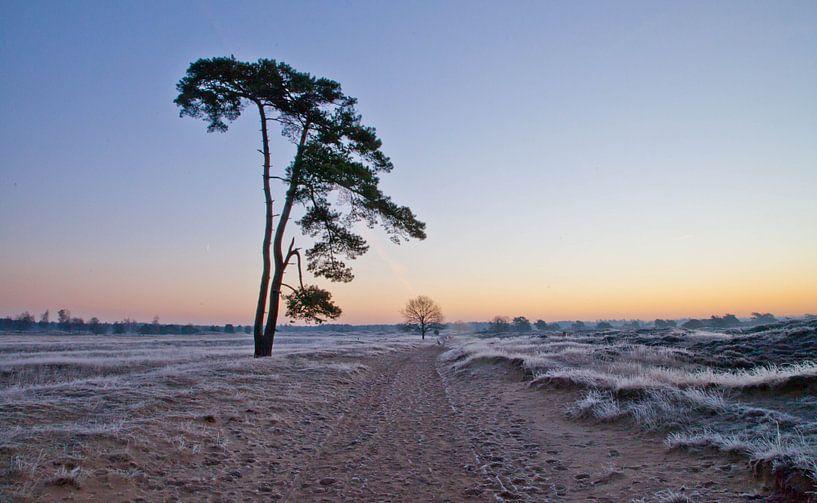 Tree van Anne Koop