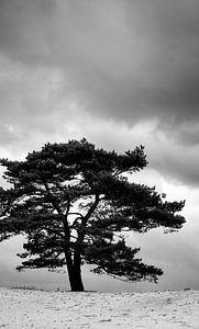Lonesome tree van Michiel de Rond