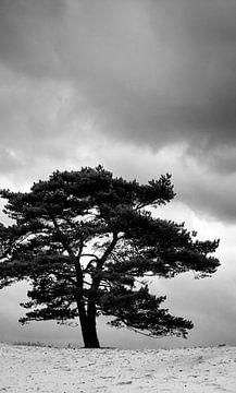 Lonesome tree von Michiel de Rond