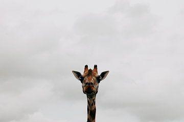 Giraffe van Carmen van Dijken