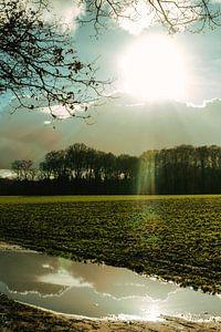 Zonlicht reflectie van