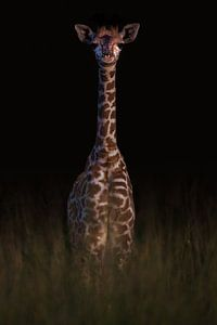 Lang en gracieus van Sharing Wildlife