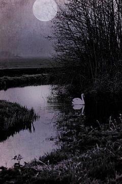 Een zwaan bij volle maan van Anouschka Hendriks