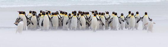 Nur ein paar Pinguine (Expo-Version)