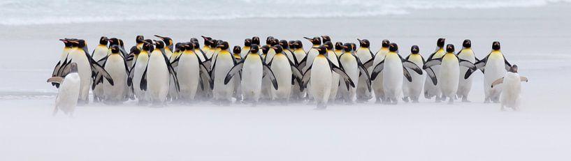 Nur ein paar Pinguine (Expo-Version) von Claudia van Zanten