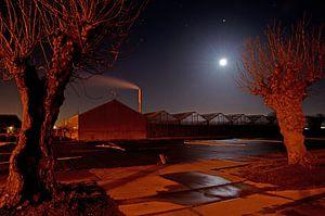 Kassen en knotwilgen in maanlicht