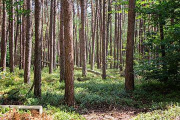 Door de bomen. sur Marc Arts