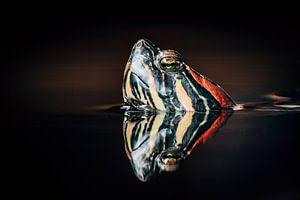 Macro foto an een schildpad in het water met reflectie. van Marion Stoffels