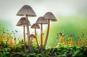 Pilze im Wald von Mark Bolijn