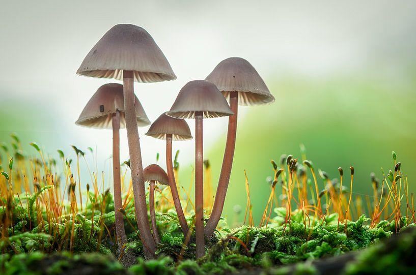 Paddenstoelen in het bos van Mark Bolijn