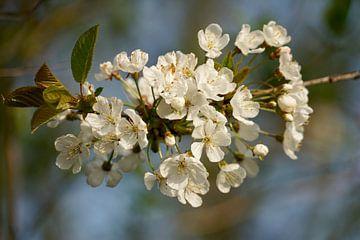 Blüte am Baum von Luci light