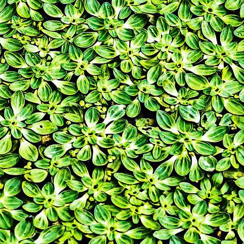 Waterplanten van Art by Jeronimo