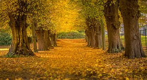 Beautiful autumn van Costas Ganasos