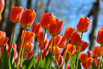 Oranje boven! van Rob Donders Beeldende kunst