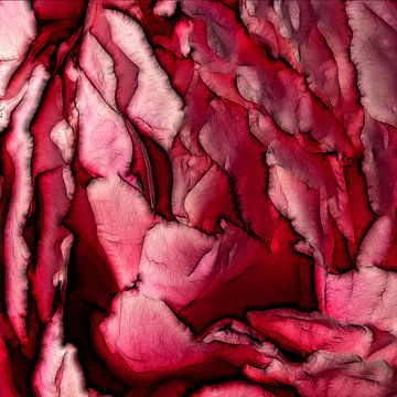 Rose von Mario de Lijser