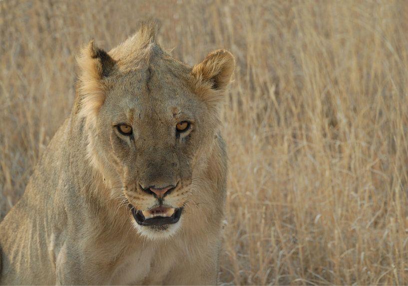leeuw van Pieter Bosch