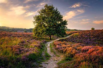 Baum auf der Heide von Martijn van der Nat