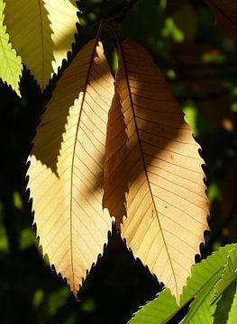Herfst 4 von Jonathan Kremer