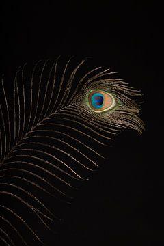 Peacock feather (2) sur Mayra Pama-Luiten