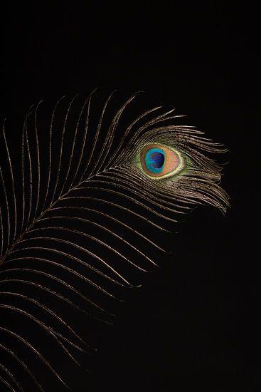 Pauwenveer (2) van Mayra Pama-Luiten