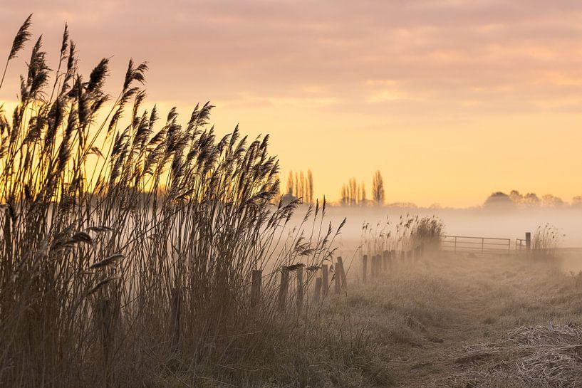 Ochtend in een mistige polder van JPWFoto