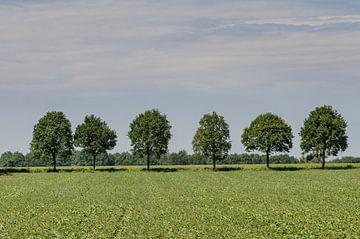 Landschap sur Cor Bak