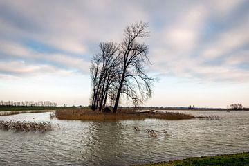 Hochwasser im Noordwaardpolder von Ruud Morijn
